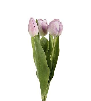 Tulpan Mix lila/rosa 36cm