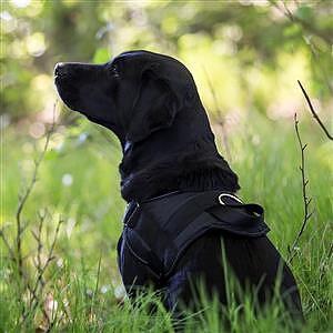 Hundsele kraftig nylon svart