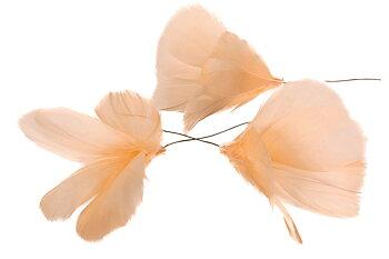 Fjäderblomma - Ljus Aprikos