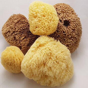 Gul Havssvamp - Yellow sponge från  7,5-22 cm