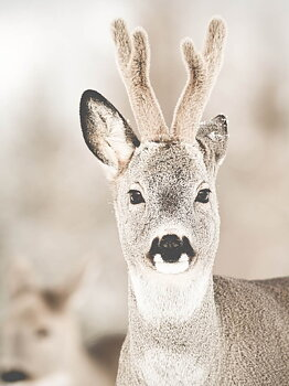 Lovely Reindeer, poster