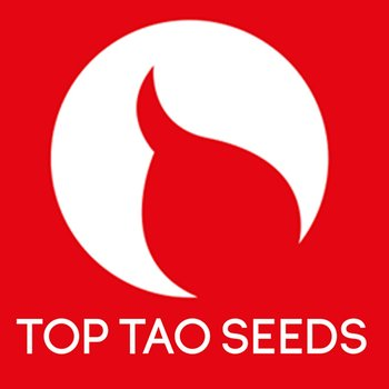 TOP TAO AUTO mix VOL 1 REGULAR 15p