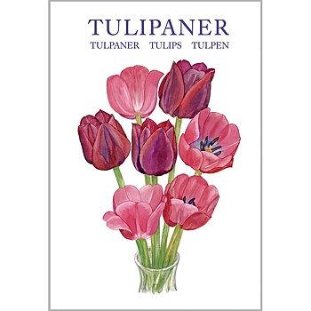 Tulpaner