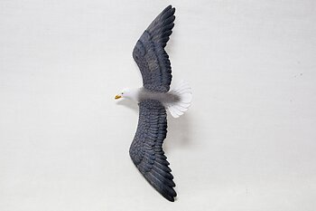 Great black-backed gull Flying 27x11 cm