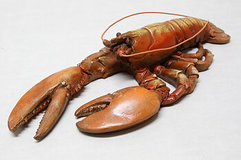 Lobster Orange 43x13 cm