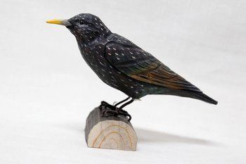 Common starling wood 17x12x5 cm