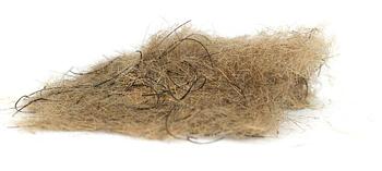 Hare's Wiggle Dub