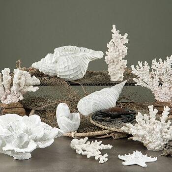 Korall Smoth