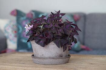 Blomkruka HELENA grå vid modell Bergs Potter