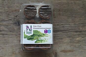 Odlingsplugg för hydroponisk odling PAK CHOI Nelson garden
