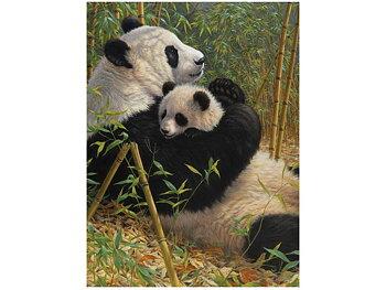 Kort 3D Panda med unge