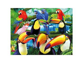 Kort 3D Tukaner i djungel