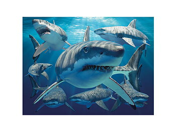 Card 3D Great white sharks