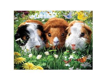 Card 3D Guinea pigs