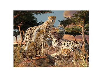 Card 3D Cheetah clan