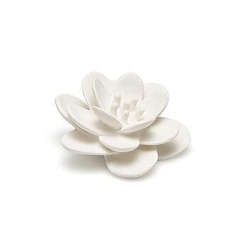 Blomma lotus vit
