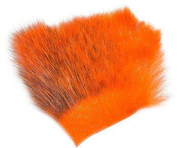 Amercan Opossum Orange