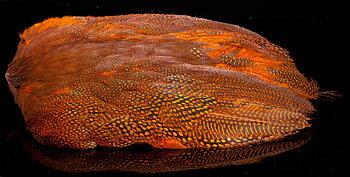 Pärlhöna Skinn Orange