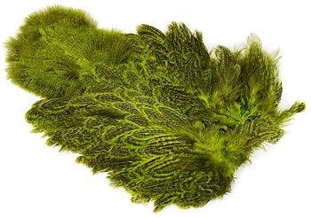 Coq De Leon Hen SH/C Speckled dyed Fl. Green Chartreuse