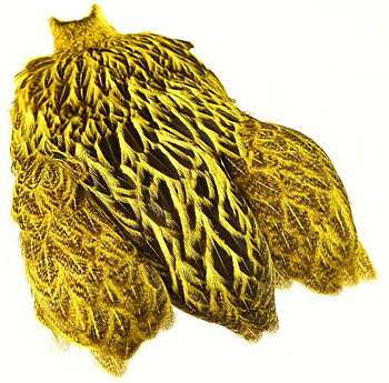 Freshwater Hen Capes Yellow