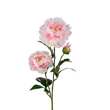 Pion Rosa 75 cm - Snittblomma Konstväxt