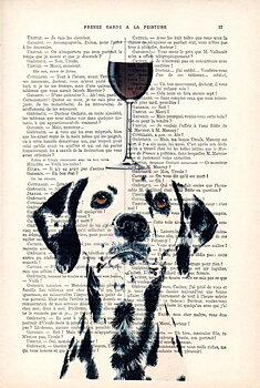 Dalmatiner med vin