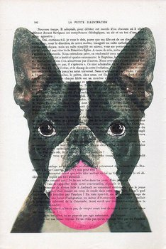 Bostonterrier med bubbla