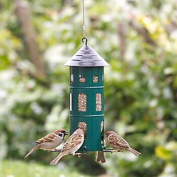 Combi Feeder Seeds Green