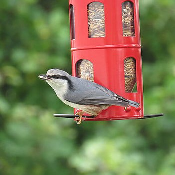 Combi Feeder Seeds Red