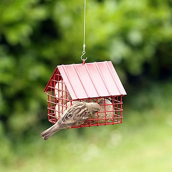Suet Ball Feeder Cottage Red