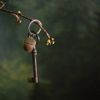 Nyckelring Ekollon