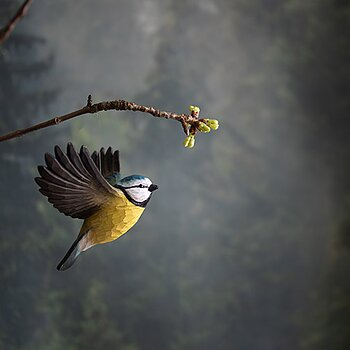 DecoBird Flying Blue Tit