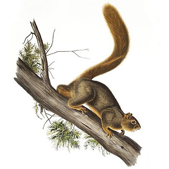 About squirrels