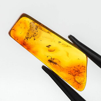 Amber, insect inclusion