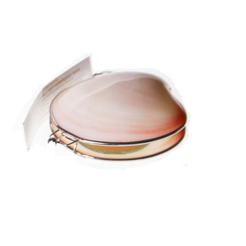 Organic Island Shell Lip Balm White Frangipani