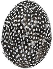 Stort ägg svart prickiga fjädrar