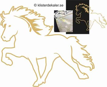 Single Icelandic horse 35