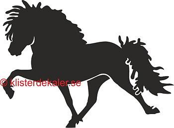 Single Icelandic horse 36