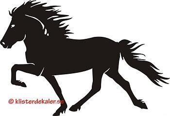 Single Icelandic horse 34