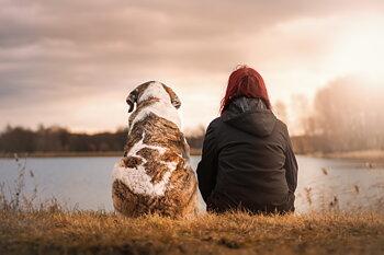 Clinic: Samarbeta med din hund i hantering, 1 november, Eskilstuna