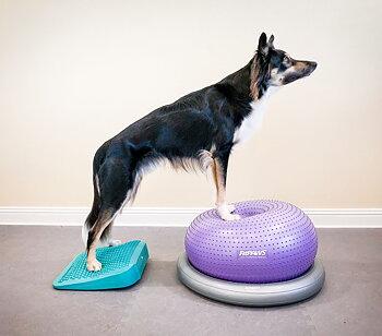 Doggie-Zen gym - cirkelträning, enstaka tillfällen