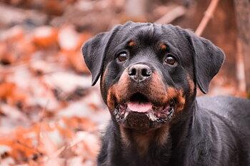 Hund- & människomöten, enstaka tillfällen, Strängnäs