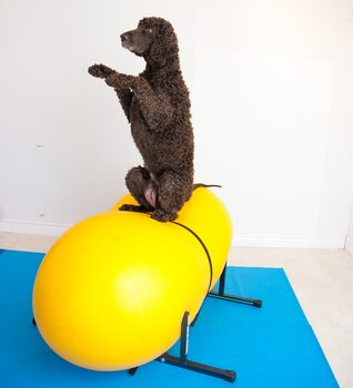 Doggie-Zen gym - del 2, 28 mars - 9 maj