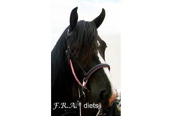 F.R.A® Dietsji Crossunder/Sidepull inkl. tyglar, svart/rosa, shettis (demo)