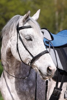 Barefoot® Bitless Bridle Contour Jewel, full (demo)