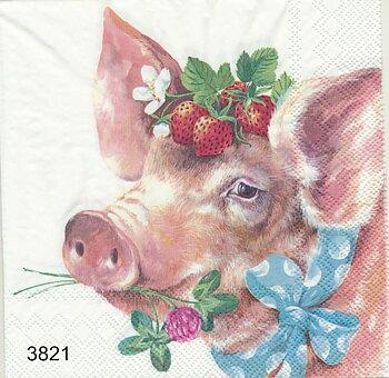 Söt sommar gris