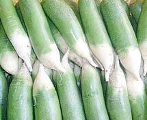 Green Luobo Rädisa / Qingluobo