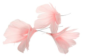 Fjäderblommor Ljusrosa