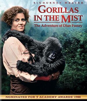 De Dimhöljda Bergens Gorillor (ej svensk text) (Blu-ray)