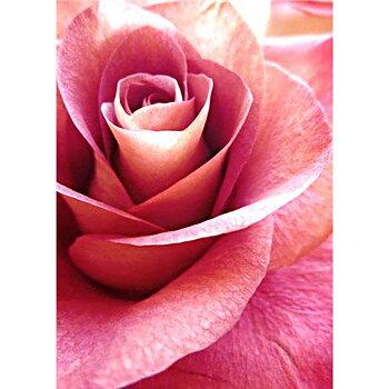 Diamond painting. Pink Rose WD019